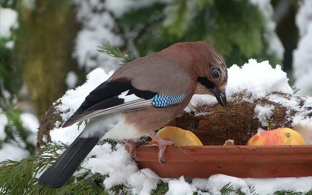 Čím krmit ptactvo v zimě