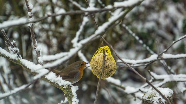 Čím krmit ptactvo - Lojové koule